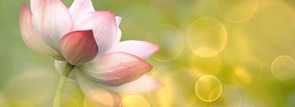 Flower Slider